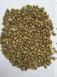 세륨 ISO SGS는 커피 콩 색깔 분류하는 사람을 증명했다
