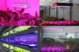 el cuadrado de 2017 90W-600W LED crece luces; Relación de transformación ligera: 8:1, 7:2, 7:1: 1 con la mezcla de luces rojas, azules, anaranjadas, amarillas y blancas