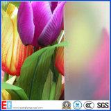 Ясное матированное стекло/кислота вытравленный стеклянный фингерпринт свободно замораживает стекло (EGAEG2)