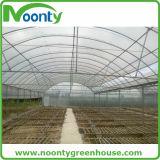 식물성 플라스틱 필름 녹색 집