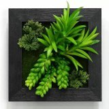 Plantas y flores artificiales de la planta suculenta Gu-SD-15123