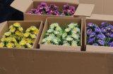Piante e fiori di plastica artificiali di piccole piante Gu201709 dei bonsai