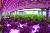 La planta crece a OEM de la lámpara de la inducción de la lámpara para Osram/Philips/Nvc