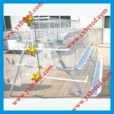 Pollo Layer Battery Cage per Farm