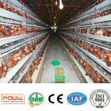 een vee van de Apparatuur van het Landbouwbedrijf van het Gevogelte van het Ei van de Kip Quility van de Kooi van de Laag van de Band Beste Automatisch