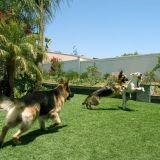庭およびDogsのための擬似Synthetic Grass Carpet