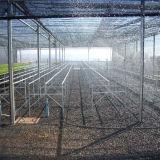 La vente de serre chaude de film de zigzag la meilleur marché des prix pour des zones sensibles *