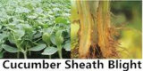 Pesticidas alta Efecto Nueva Formulación de amplio espectro fungicida metalaxil Himexazol sinérgica Agente