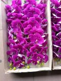 Fiori artificiali dell'orchidea 66cm Gu7262424