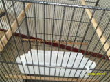 Jaula china del loro de la fábrica de la jaula de pájaro para la venta