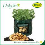 Onlylife 움직일 수 있는 널리 이용되는 PE 식물성 진한 녹색은 부대를 증가한다