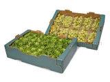 صندوق نباتيّة|[أبّل] صندوق ([فب1011])