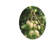 Polvere diretta della spremuta del mango dell'ingrediente di alimento del rifornimento del fornitore con elevata purezza