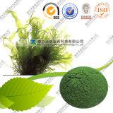 Großhandelschlorella Spirulina organisches Spirulina Protein-Puder