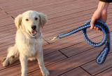 كلب كبيرة متحمّل نيلون الزلّة رباط مع طوق