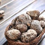 Fungo del fiore del tè secco pianta della molla dell'alimento di Yongxing