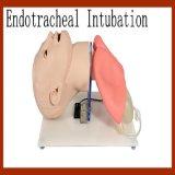 Modello formativo endotracheale umano di avanzamento di intubazione