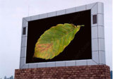 Visualización de LED al Aire Libre a Todo Color Publicitaria Económica (P20)