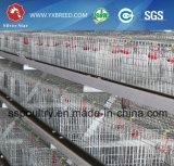 Equipo de cultivo de acero del pollo de las aves de corral de la jaula de la capa de la batería