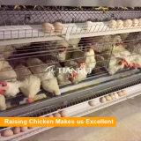 Цыпленок цыплятины наслаивает автоматические клетки батареи