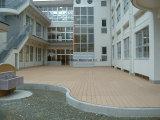 Barato de la buena calidad WPC terrazas