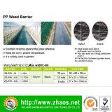 Stuoia della barriera del Weed del tessuto tessuta pp