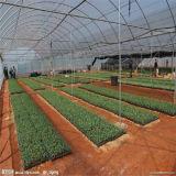 온실을%s 식물성 사용된 플레스틱 필름 덮개를 위한 UV 코팅 공간 온실