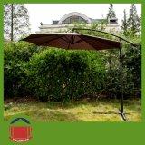 교차하는 기초를 가진 불안정한 정원 바나나 우산
