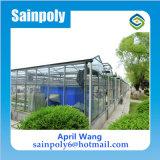 Serra di vetro della Muti-Portata calda di vendita per le piante