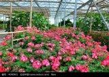 RS--温室(花)のためのSGSの証明書とのPullplastc