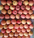 Buen Quality de Fresh Apple Strip Red Color