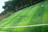 Soccer Field (ES88-50 Pastoralの緑)のための反紫外線Synthetic Grass
