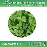 Diterpène naturel de l'extrait 60% de 100% Rabdosia Japonica Hara