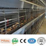 자동적인 닭 가금은 어린 암탉과 작은 닭 (H 유형 프레임)를 위해 감금한다