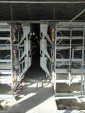 Sistema automático de la jaula del pollo tomatero de las aves de corral