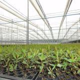 2016 최신 판매에 의하여 직류 전기를 통하는 강철 프레임 중국 다중 경간 토마토 온실