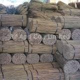 Tonkin Caña Recta de Bambú Seco Natural