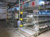 آليّة طبقة دجاجة قفص تجهيز ([ا] إطار)