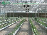오이를 위한 Substrates 코코야자 토탄에 있는 수경법