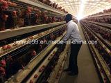 un type cage de poulet pour la ferme de poulette de grilleur de couche