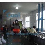 Chaîne de production de surgélation de fève