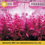 La pianta medica LED della PANNOCCHIA di prezzi di fabbrica 800W 1000W 1200W coltiva l'indicatore luminoso