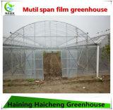 Multispan Handelswasserkulturfilm-grünes Haus für Himbeere