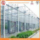 Glas-/Höhlung-ausgeglichenes Glas-Gewächshäuser mit Ventilations-System