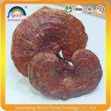 Чисто естественное травяное тело плодоовощ Ganoderma Lucidum