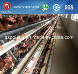 南アフリカ共和国の最もよい価格の販売のための自動層の鶏のケージ