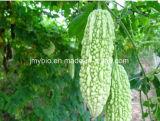 Uittreksel Charantin 1%~20% van de Meloen van Saponienen 5-30% van het Verlies van het gewicht het Bittere