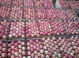 Das neue frische Getreide erröten roter FUJI Apple
