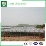 Agricoltura/serre di polietilene traforo commerciale della pellicola per la fragola/Rosa