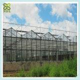 실내 식물성 성장하고 있는 알루미늄 프레임 유리제 녹색 집